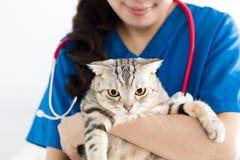 De vrouwelijke leuke kat van de artsen veterinaire holding stock foto's