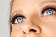 De vrouwelijke ogen met uiterste snakken valse wimpers Wimperuitbreidingen, samenstelling, schoonheidsmiddelen, schoonheid stock fotografie