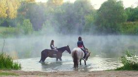 De vrouwelijke ruiters op mooie paarden komen in het water, mist stock footage