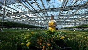 De vrouwelijke tuinman duwt een kar met gele tulpen, beweegt bloemen stock videobeelden