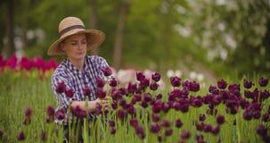 De vrouwelijke Tulpen van Onderzoekerswalking while examining bij Gebied stock video