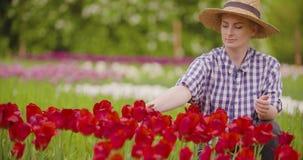 De vrouwelijke Tulpen van Onderzoekerswalking while examining bij Gebied stock footage