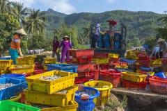 De vrouwen laden kleurrijke manden van sardines op een vrachtwagen Stock Foto