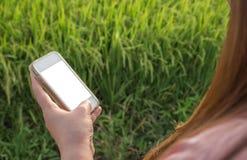 De vrouwen overhandigen het gebruiken van slimme telefoon Stock Fotografie
