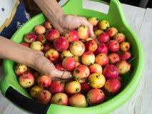 De vrouwen` s handen wasten appelen in het bekken royalty-vrije stock foto