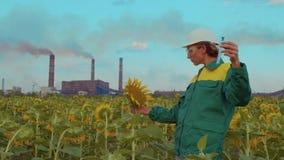 De vrouwenagronoom onderzoekt zonnebloem op de achtergrond van de zonsondergang gebruikend een reageerbuis stock footage