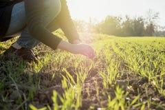 De vrouwenbioloog die van de Wounglandbouw de oogst inspecteren royalty-vrije stock foto