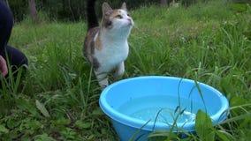 De vrouwenhand liet vissen in blauwe kom met water en kattenhuisdierenvangst Royalty-vrije Stock Foto