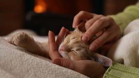 De vrouwenhanden houden leuke oranje katjes hoofdslaap in haar palm stock footage