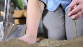 De vrouwenhanden werken in moestuin plantend de installatie in de grond door de wortels schoon te maken zodat het kan groeien stock videobeelden