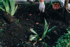 De vrouwenlandbouwer behandelt de installaties op de aanplanting farming royalty-vrije stock foto