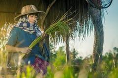 De vrouwenlandbouwer oogst rijst in Thailand Stock Afbeelding