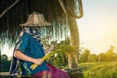 De vrouwenlandbouwer oogst rijst in Thailand Royalty-vrije Stock Fotografie