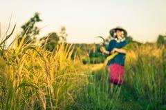 De vrouwenlandbouwer oogst rijst in Thailand Royalty-vrije Stock Foto