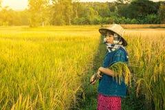 De vrouwenlandbouwer oogst rijst in Thailand Stock Foto