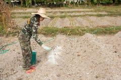 De vrouwentuinlieden zetten kalk of calciumhydroxyde in de grond om de zuurheid van de grond te neutraliseren stock foto's