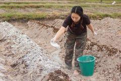 De vrouwentuinlieden zetten kalk of calciumhydroxyde in de grond om de zuurheid van de grond te neutraliseren stock afbeeldingen