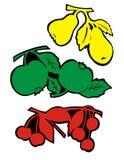 De vruchten en doorbladeren - gekleurd stock illustratie
