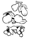 De vruchten en doorbladeren - overzicht stock illustratie