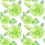 De vruchten van de citrusvruchtenplak waterverfhand getrokken patroon Sinaasappel, citroen, kalk op witte achtergrond wordt geïso stock foto