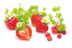 De vruchten van de aardbei met bloemen en bladeren op wit Royalty-vrije Stock Afbeeldingen