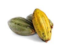 De vruchten van de cacao Stock Afbeeldingen
