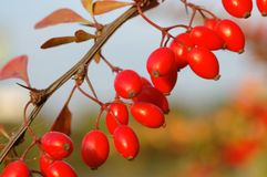 De Vruchten van de herfst Royalty-vrije Stock Afbeelding