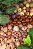 De vruchten van de herfst Royalty-vrije Stock Afbeeldingen