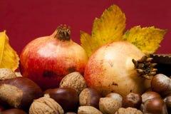 De vruchten van de herfst Stock Afbeeldingen