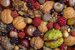 De vruchten van de herfst Stock Foto