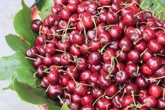 De vruchten van de kers met doorbladeren Stock Foto's