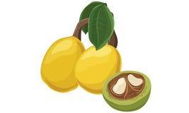 De vruchten van de Marulaboom Royalty-vrije Stock Foto