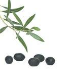 De vruchten van de olijf Stock Afbeeldingen