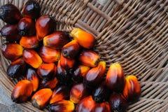 De vruchten van de palmolie Royalty-vrije Stock Afbeeldingen
