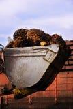 De vruchten van de palmolie Royalty-vrije Stock Foto