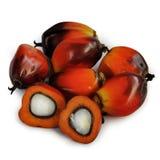 De vruchten van de palmolie Stock Fotografie