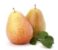 De vruchten van de peer stock foto