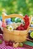 De vruchten van de zomer in de tuin Stock Afbeeldingen