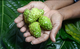 De vruchten van Noni Royalty-vrije Stock Fotografie