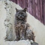 De vuile zitting van de straatkat in openlucht Stock Foto's