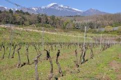 De vulkaan van Etna met wijngaarden Sicilië Italië stock afbeelding
