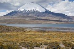 De vulkaan van Parinacota Royalty-vrije Stock Foto's
