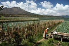 DE VULKAANlandschap VAN MT BATUR VAN AZIË INDONESIË BALI Royalty-vrije Stock Foto