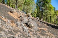 De vulkanische rotsen landen pijnboomnaalden in Mirador del Llano del Jable, La Palma, Canarische Eilanden stock foto