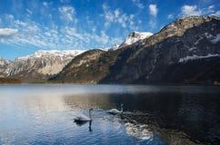 De waaier van alpen met meer en zwanen Stock Afbeelding
