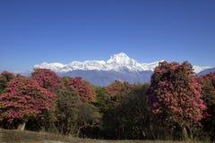 De Waaier van Annapurna Stock Afbeeldingen