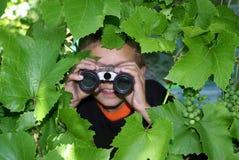 De waarnemer. Stock Foto's