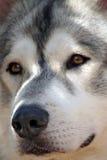 De wacht van de hond Royalty-vrije Stock Afbeelding