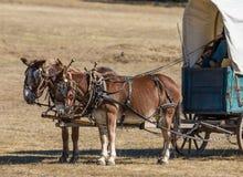 De Wagen van de Burgeroorloglevering Stock Afbeelding