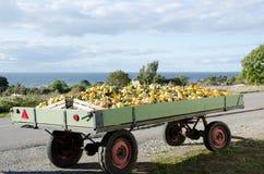 De wagen van de pompoen bij de weg Stock Foto's